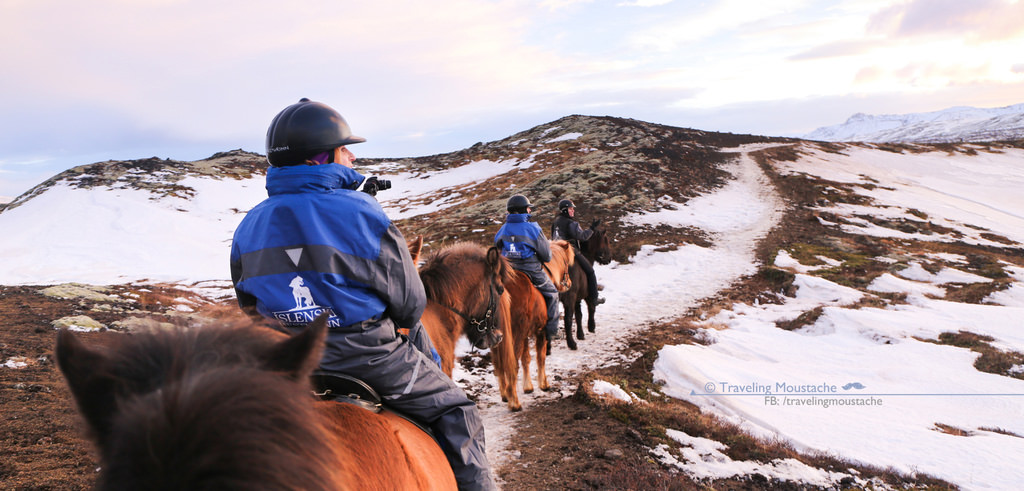 冰島旅遊|騎乘短腿冰島馬 & 雷克雅維克賞鯨
