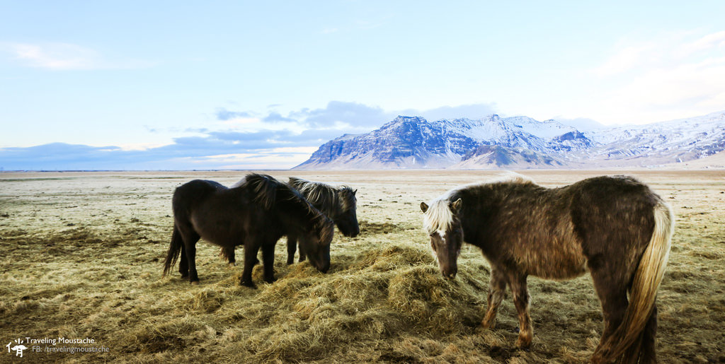 冰島旅遊|南海岸瀑布之旅,Skogafoss、Seljalandsfoss、Vik
