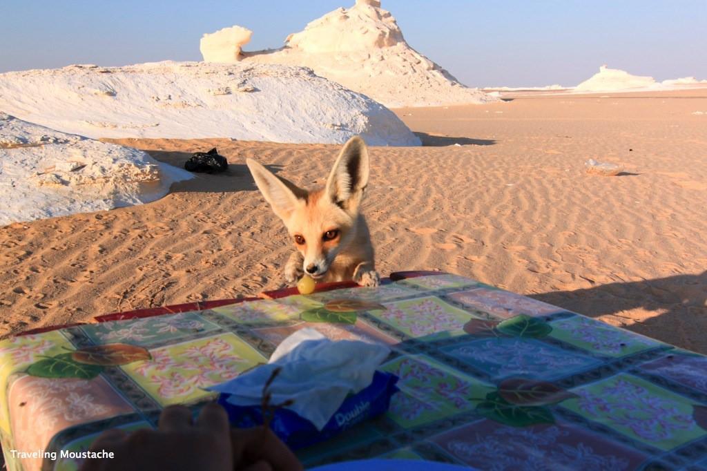 埃及旅遊|黑白沙漠挑戰帥氣衝沙